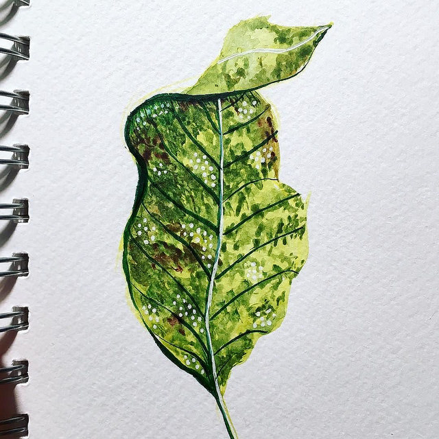 Green leaf with many dark green and white dots