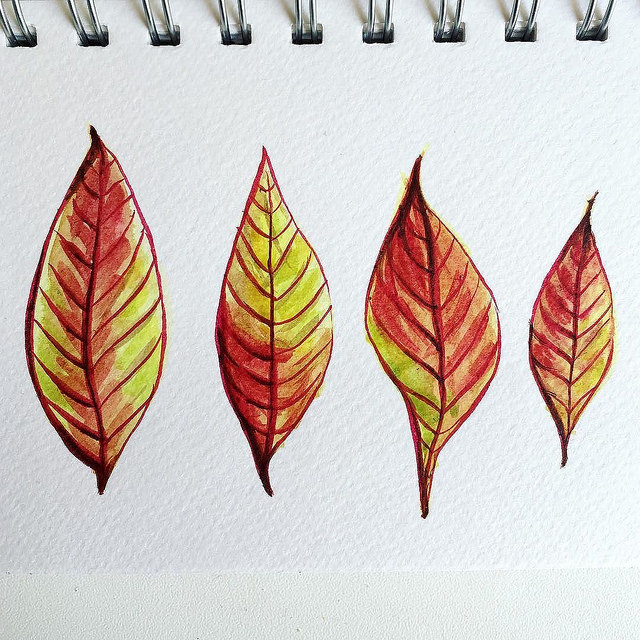 Four yellowish red pointy leaves