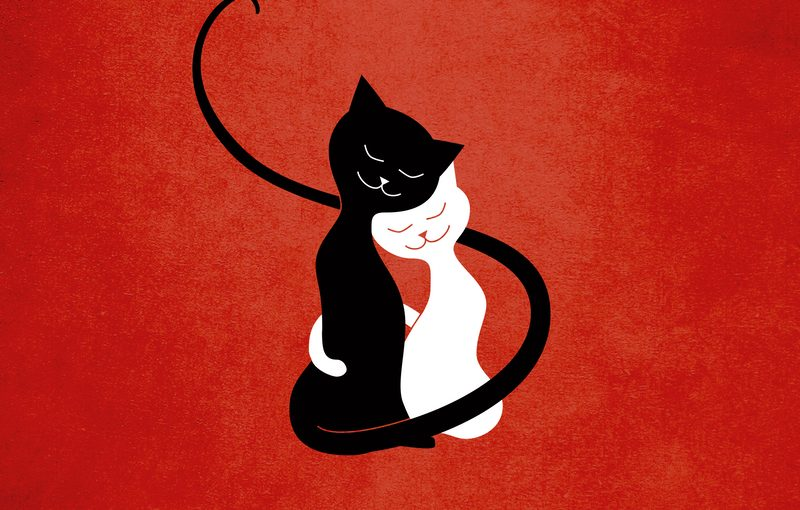 Love cats illustration on two black and white cats hugging each other with their tails.