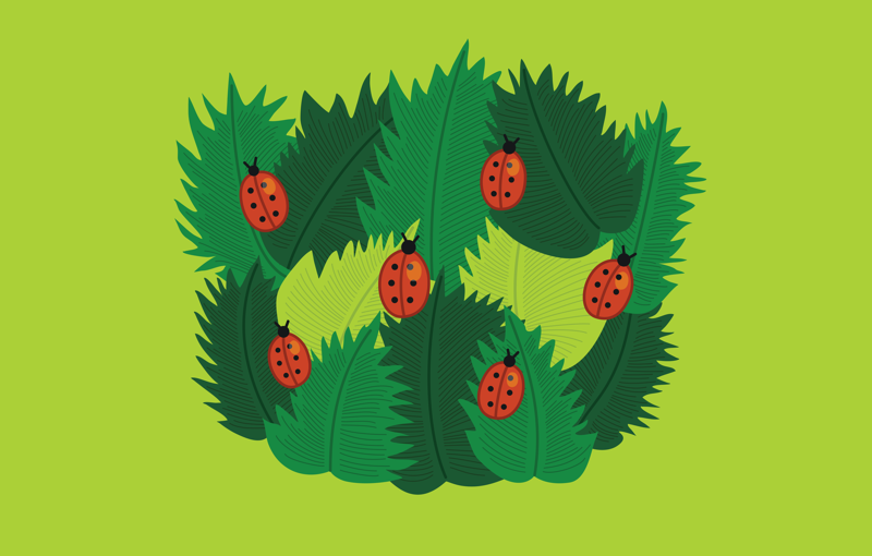 Spring leaves and ladybugs illustration