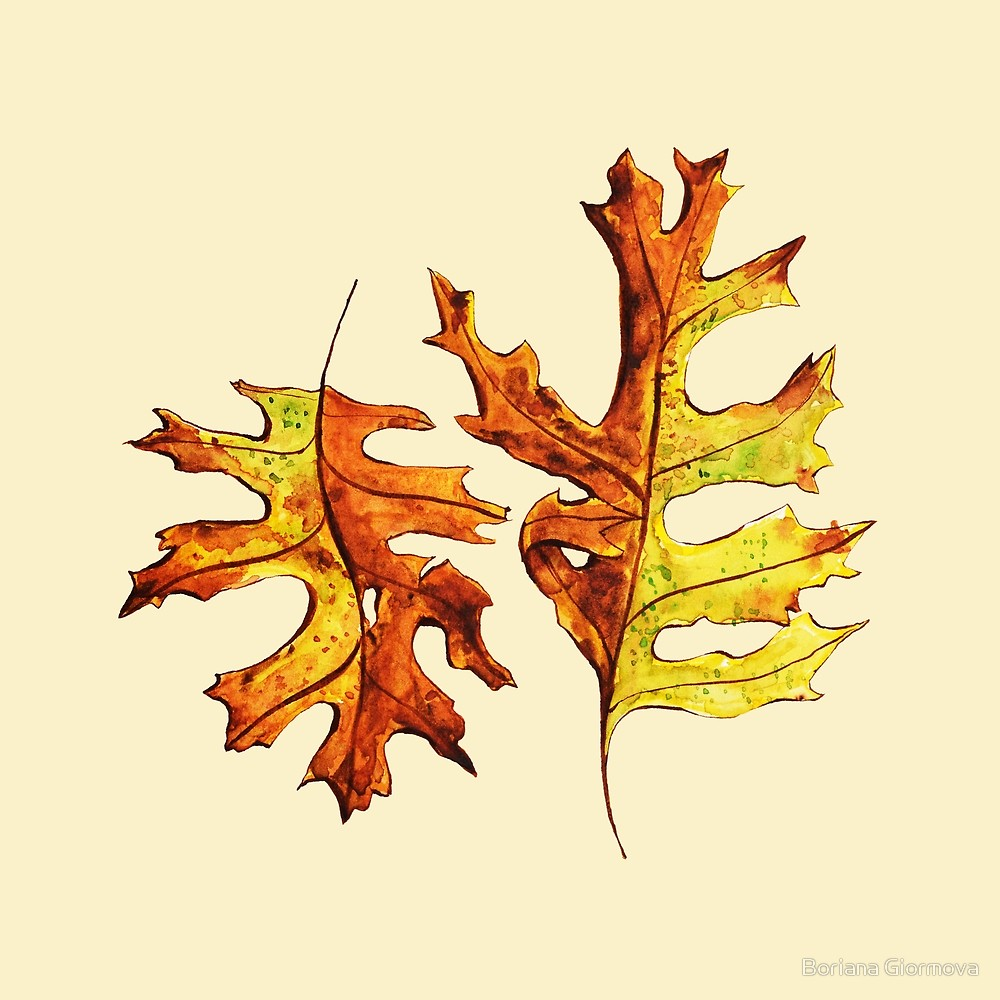 Watercolor and ink illustration of two pin oak leaves