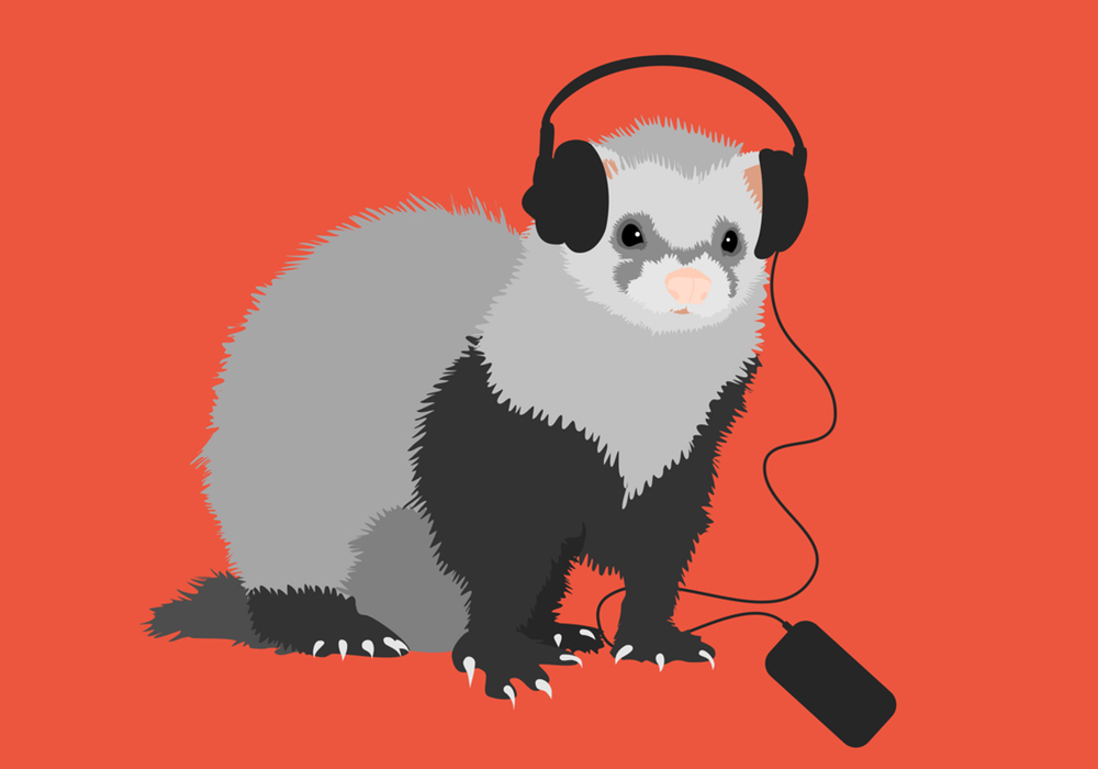 Ferret music lover vector illustration depicting a cute fluffy ferret with headphones